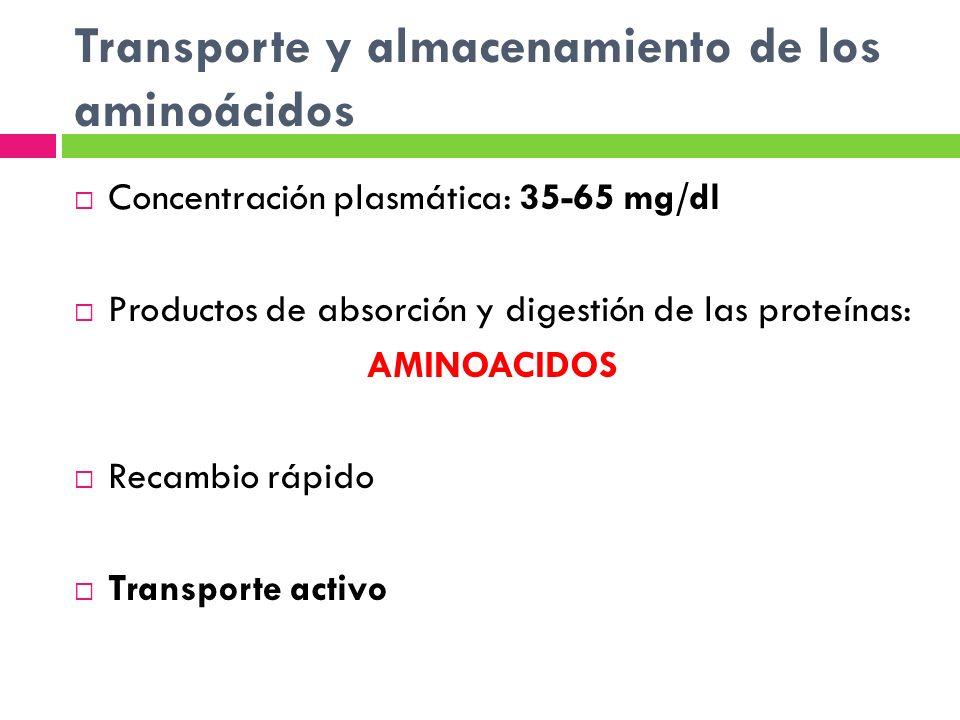 Transporte y almacenamiento de los aminoácidos Concentración plasmática: 35-65 mg/dl Productos de absorción y digestión de las proteínas: AMINOACIDOS