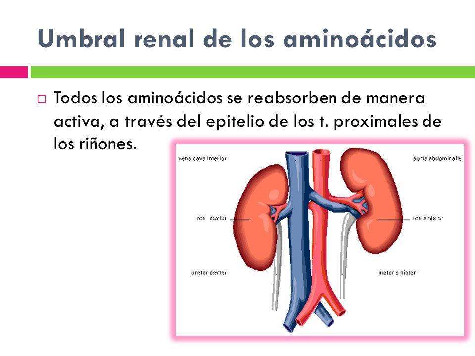 Umbral renal de los aminoácidos Todos los aminoácidos se reabsorben de manera activa, a través del epitelio de los t. proximales de los riñones.