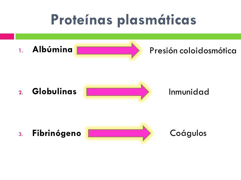 Proteínas plasmáticas 1. Albúmina 2. Globulinas 3. Fibrinógeno Presión coloidosmótica Inmunidad Coágulos