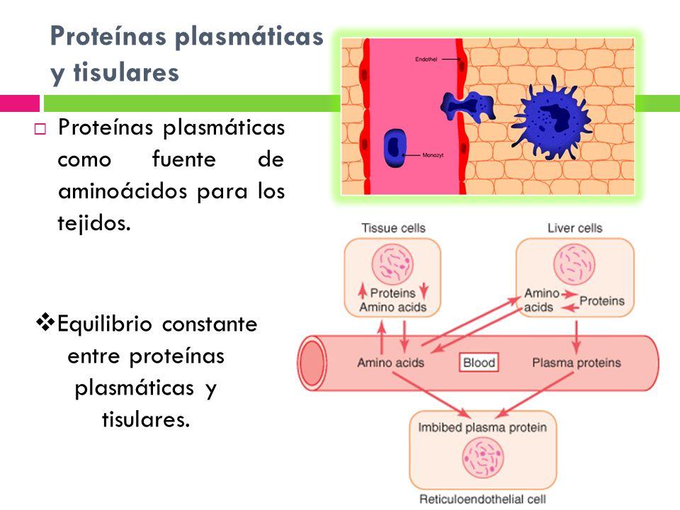Proteínas plasmáticas y tisulares Proteínas plasmáticas como fuente de aminoácidos para los tejidos. Equilibrio constante entre proteínas plasmáticas