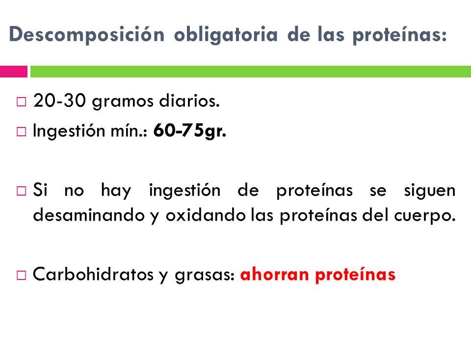 Descomposición obligatoria de las proteínas: 20-30 gramos diarios. Ingestión mín.: 60-75gr. Si no hay ingestión de proteínas se siguen desaminando y o
