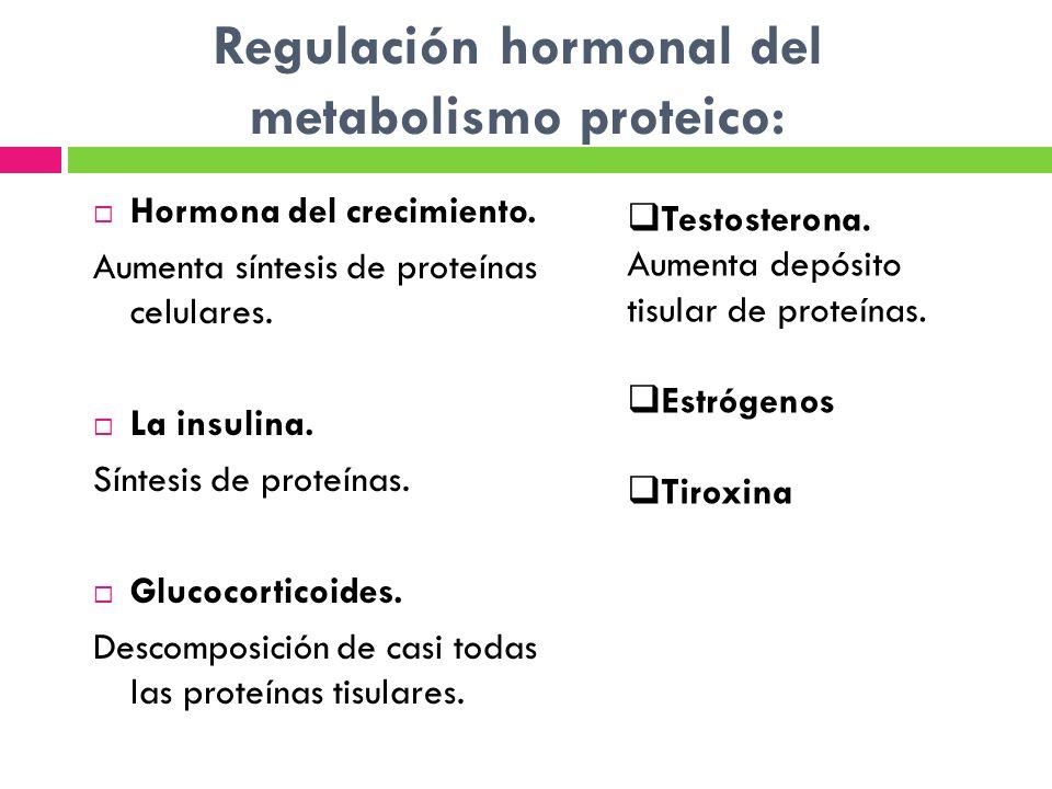 Regulación hormonal del metabolismo proteico: Hormona del crecimiento. Aumenta síntesis de proteínas celulares. La insulina. Síntesis de proteínas. Gl