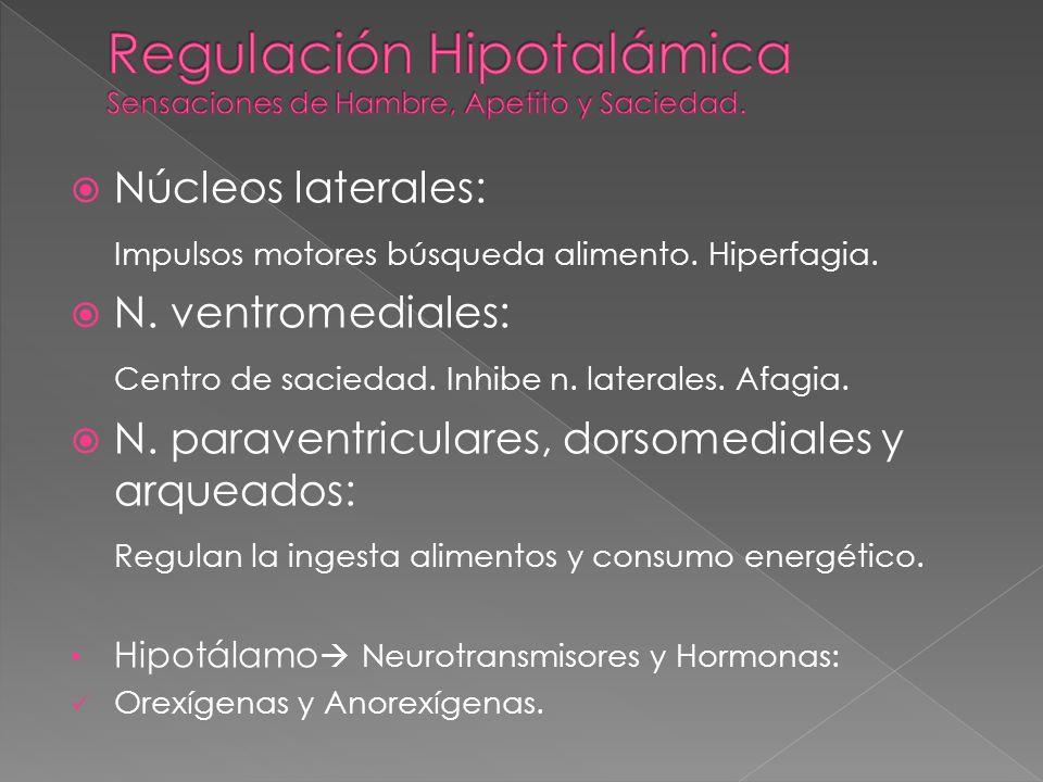 Núcleos laterales: Impulsos motores búsqueda alimento. Hiperfagia. N. ventromediales: Centro de saciedad. Inhibe n. laterales. Afagia. N. paraventricu