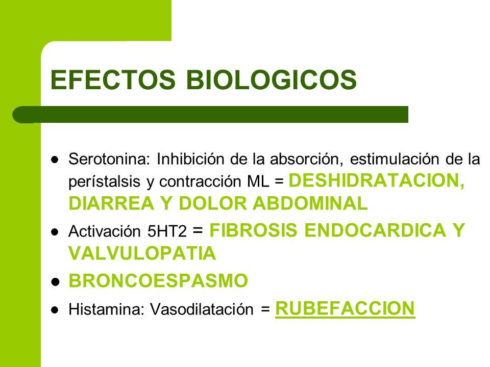 EFECTOS BIOLOGICOS Serotonina: Inhibición de la absorción, estimulación de la perístalsis y contracción ML = DESHIDRATACION, DIARREA Y DOLOR ABDOMINAL