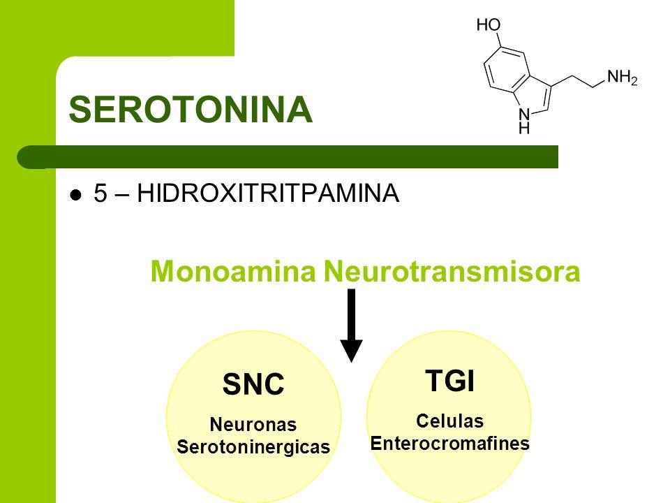 SEROTONINA 5 – HIDROXITRITPAMINA Monoamina Neurotransmisora SNC Neuronas Serotoninergicas TGI Celulas Enterocromafines