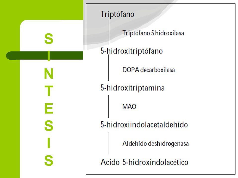 SINTESISSINTESIS