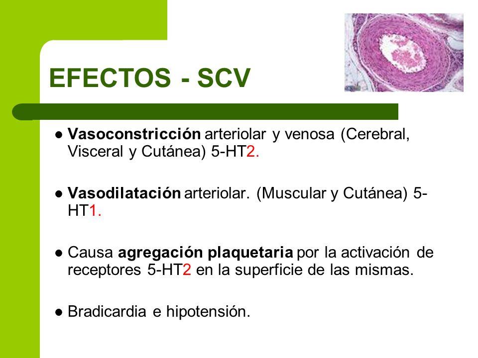 Vasoconstricción arteriolar y venosa (Cerebral, Visceral y Cutánea) 5-HT2. Vasodilatación arteriolar. (Muscular y Cutánea) 5- HT1. Causa agregación pl