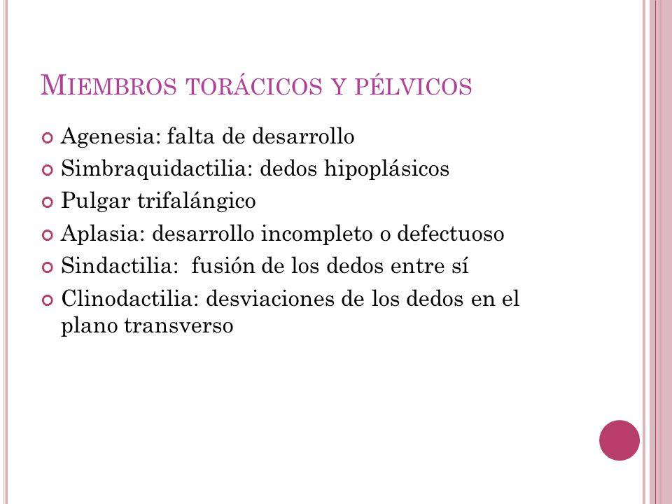 M IEMBROS TORÁCICOS Y PÉLVICOS Agenesia: falta de desarrollo Simbraquidactilia: dedos hipoplásicos Pulgar trifalángico Aplasia: desarrollo incompleto o defectuoso Sindactilia: fusión de los dedos entre sí Clinodactilia: desviaciones de los dedos en el plano transverso