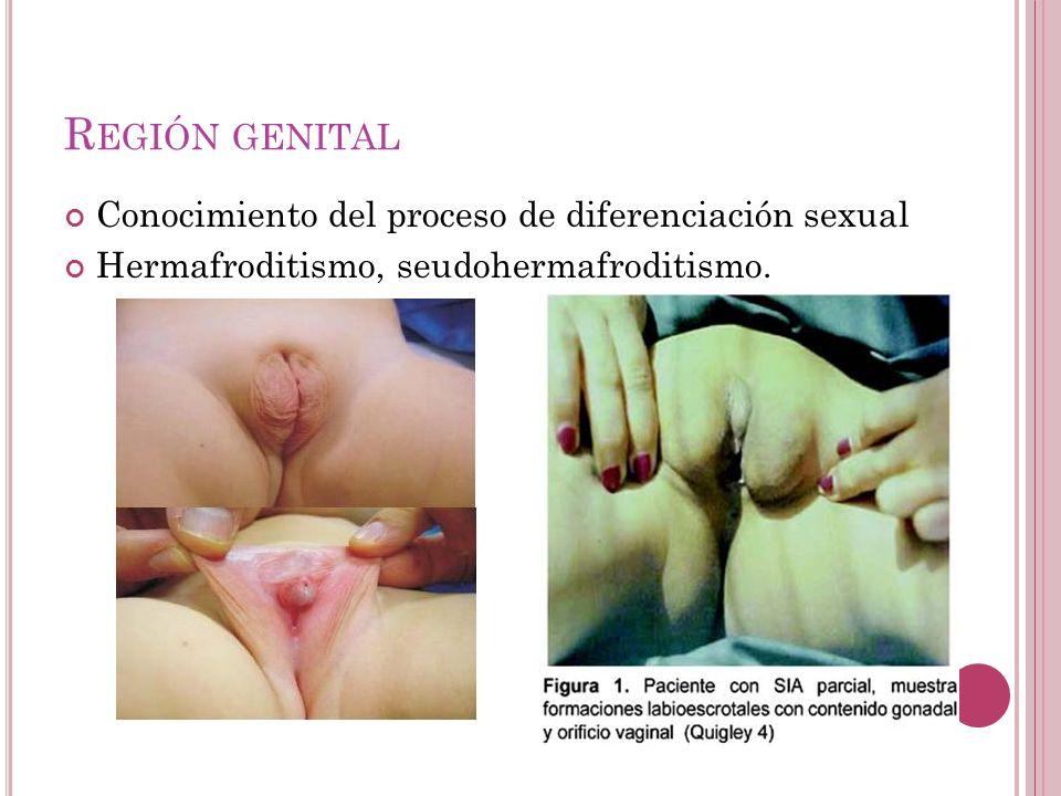 R EGIÓN GENITAL Conocimiento del proceso de diferenciación sexual Hermafroditismo, seudohermafroditismo.