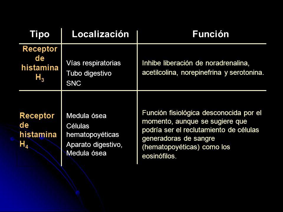 Receptor de histamina H 3 Vías respiratorias Tubo digestivo SNC Inhibe liberación de noradrenalina, acetilcolina, norepinefrina y serotonina. Receptor