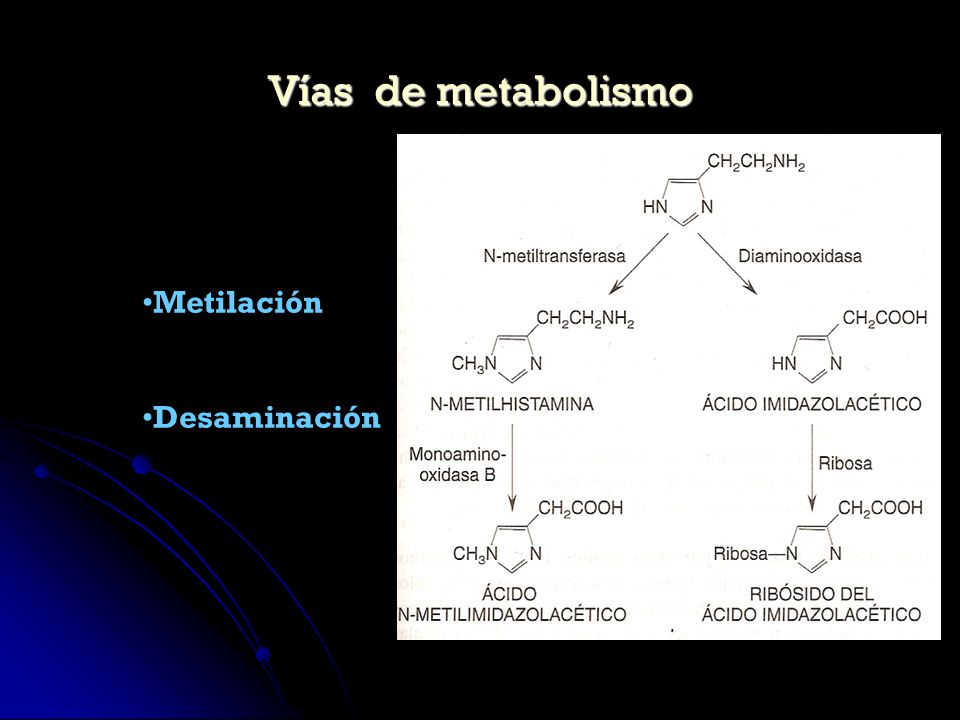 Vías de metabolismo Metilación Desaminación