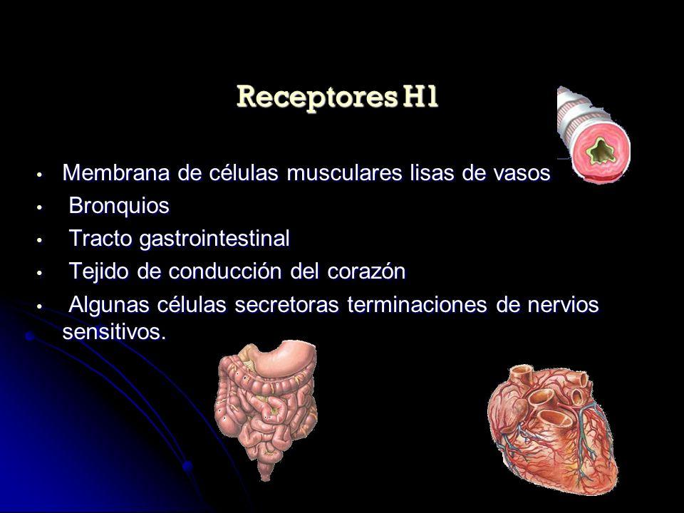 Membranas de células parietales de la mucosa gástrica Membranas de células parietales de la mucosa gástrica Células musculares lisas de vasos Células musculares lisas de vasos Células miocárdicas Células miocárdicas Células basófilas (autorreceptores) Células basófilas (autorreceptores) Receptores H2