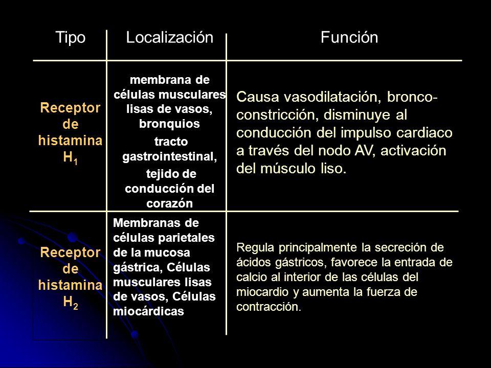 TipoLocalizaciónFunción Receptor de histamina H 1 membrana de células musculares lisas de vasos, bronquios tracto gastrointestinal, tejido de conducci