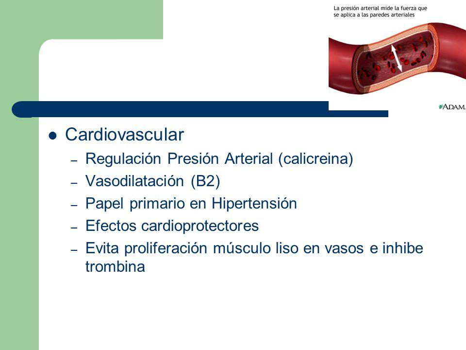 Cardiovascular – Regulación Presión Arterial (calicreina) – Vasodilatación (B2) – Papel primario en Hipertensión – Efectos cardioprotectores – Evita p