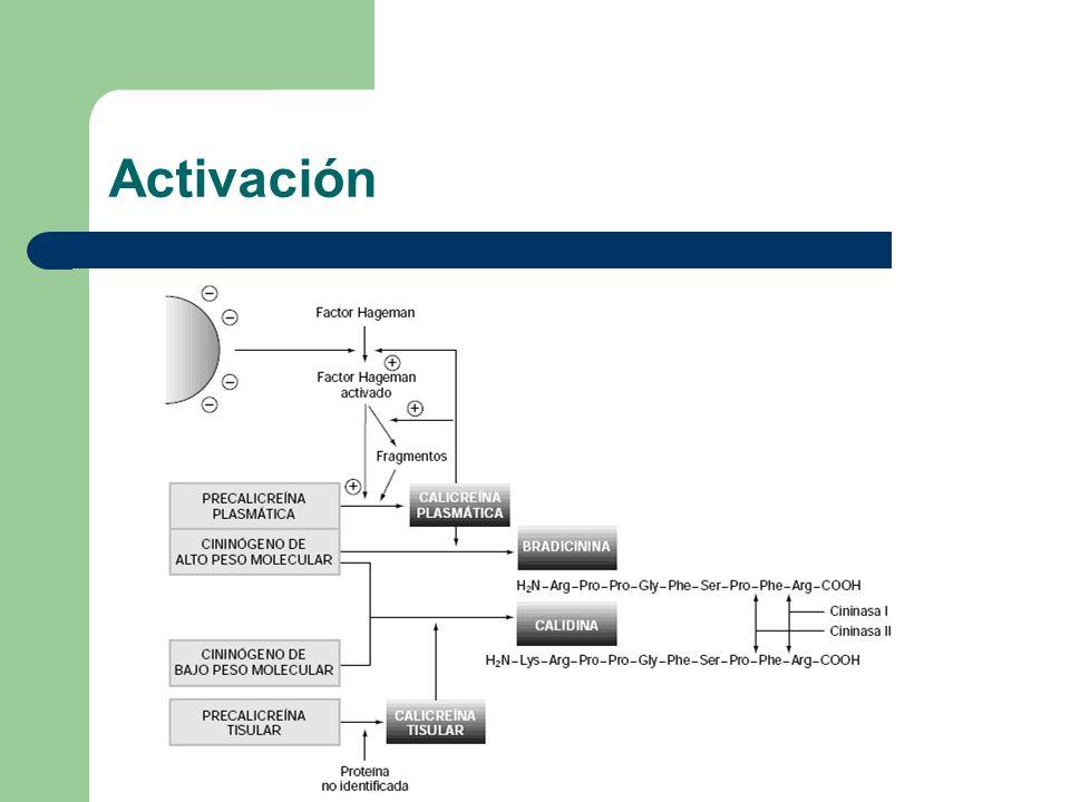 El factor de Hageman (XII) activa a la precalicreina plasmática por medio de un ambiente electronegativo.
