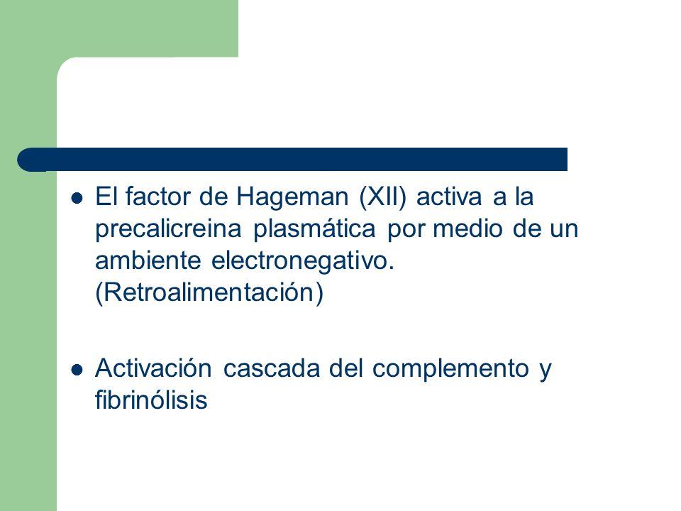 El factor de Hageman (XII) activa a la precalicreina plasmática por medio de un ambiente electronegativo. (Retroalimentación) Activación cascada del c