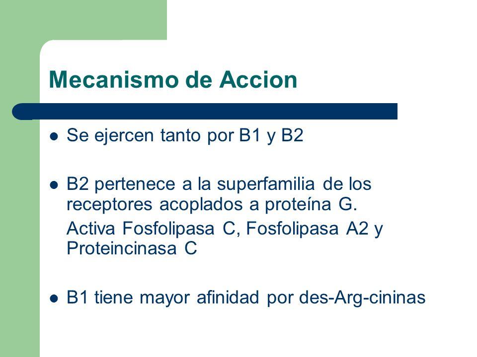 Mecanismo de Accion Se ejercen tanto por B1 y B2 B2 pertenece a la superfamilia de los receptores acoplados a proteína G. Activa Fosfolipasa C, Fosfol