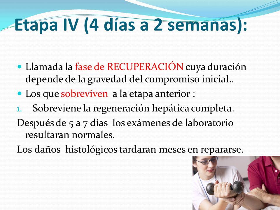 Etapa IV (4 días a 2 semanas): Llamada la fase de RECUPERACIÓN cuya duración depende de la gravedad del compromiso inicial.. Los que sobreviven a la e