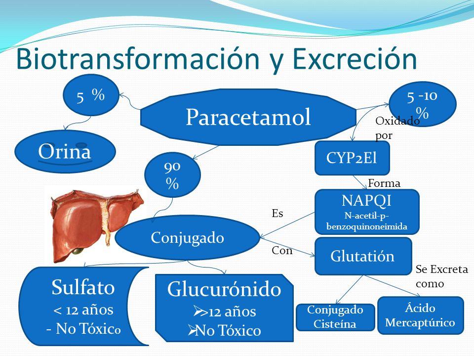 Biotransformación y Excreción Paracetamol Sulfato < 12 años - No Tóxic o Glucurónido >12 años No Tóxico Orina 5 -10 % 90 % 5 % Conjugado CYP2El NAPQI N-acetil-p- benzoquinoneimida Oxidado por Glutatión Conjugado Cisteína Ácido Mercaptúrico Forma Es Con Se Excreta como 1.Potencialmente Tóxico 2.Muy Reactivo 3.Electrófilo
