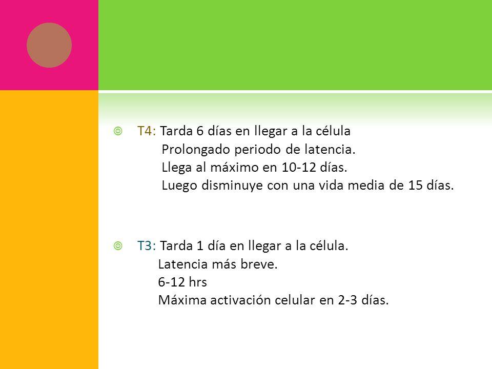 T4: Tarda 6 días en llegar a la célula Prolongado periodo de latencia. Llega al máximo en 10-12 días. Luego disminuye con una vida media de 15 días. T