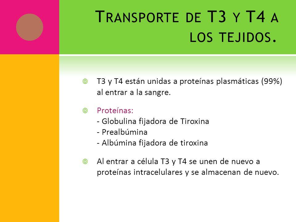 T RANSPORTE DE T3 Y T4 A LOS TEJIDOS. T3 y T4 están unidas a proteínas plasmáticas (99%) al entrar a la sangre. Proteínas: - Globulina fijadora de Tir