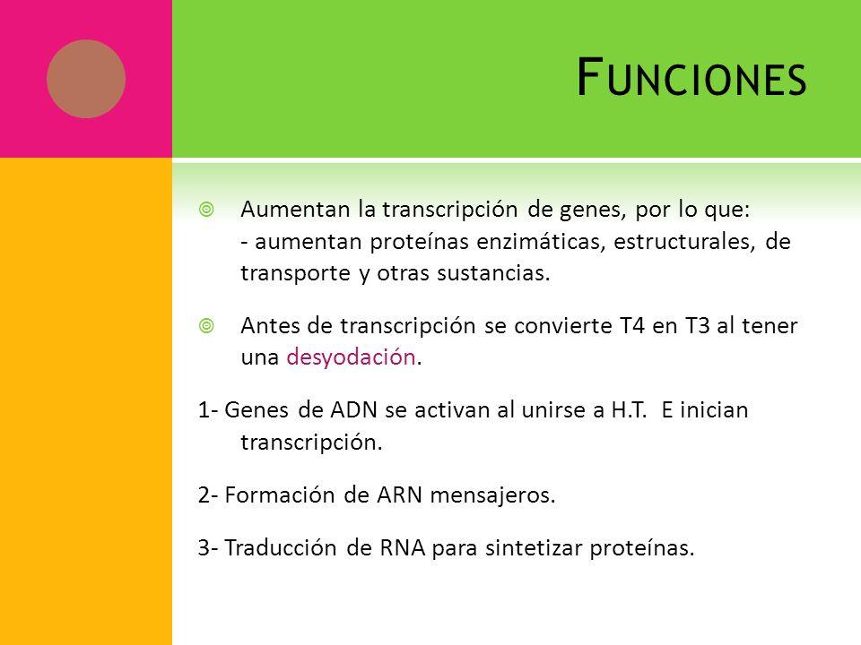 F UNCIONES Aumentan la transcripción de genes, por lo que: - aumentan proteínas enzimáticas, estructurales, de transporte y otras sustancias. Antes de