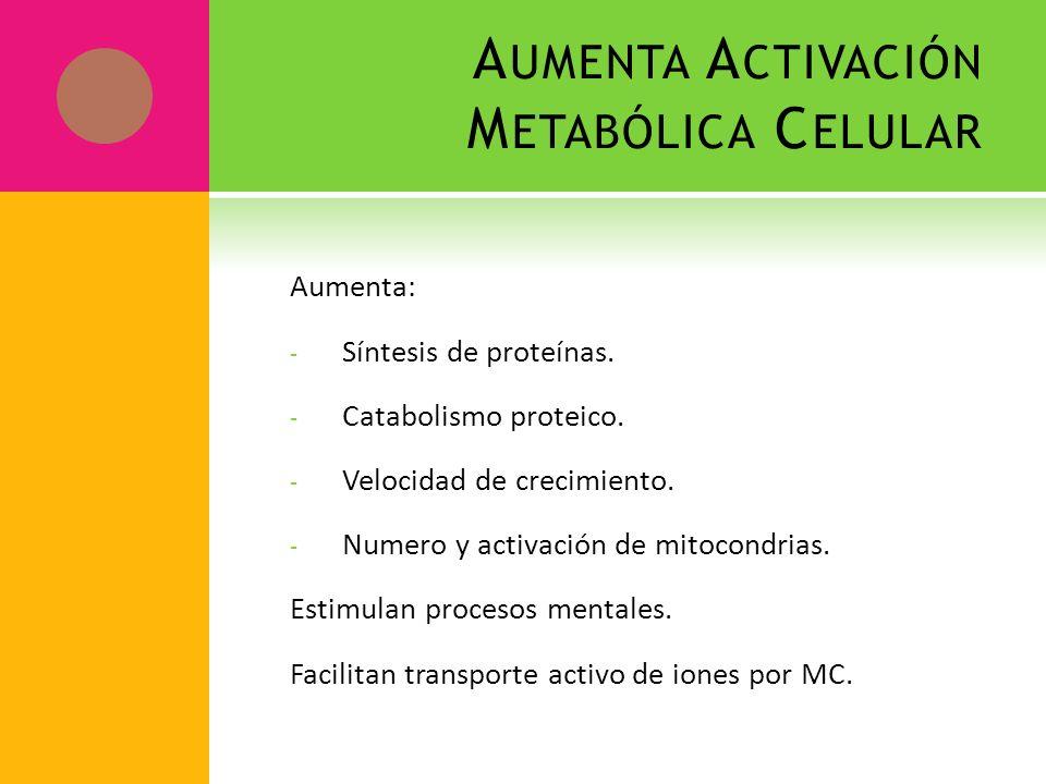 A UMENTA A CTIVACIÓN M ETABÓLICA C ELULAR Aumenta: - Síntesis de proteínas. - Catabolismo proteico. - Velocidad de crecimiento. - Numero y activación