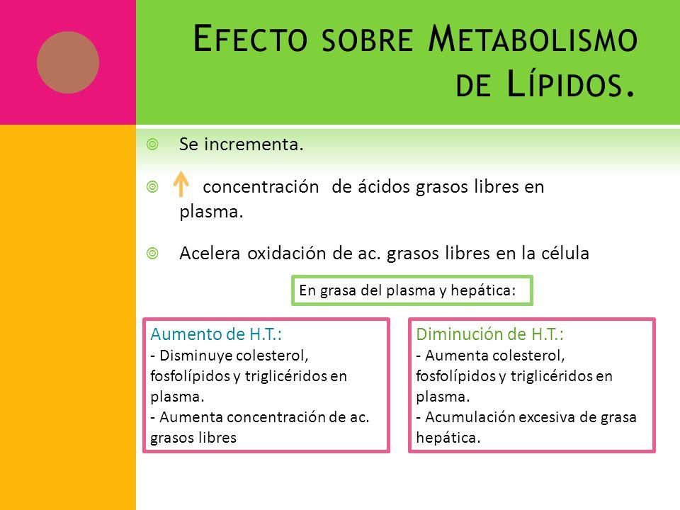 E FECTO SOBRE M ETABOLISMO DE L ÍPIDOS. Se incrementa. concentración de ácidos grasos libres en plasma. Acelera oxidación de ac. grasos libres en la c