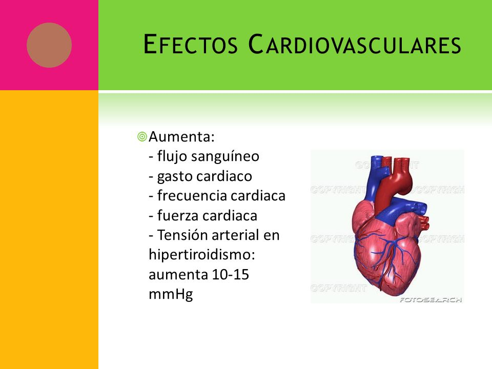 E FECTOS C ARDIOVASCULARES Aumenta: - flujo sanguíneo - gasto cardiaco - frecuencia cardiaca - fuerza cardiaca - Tensión arterial en hipertiroidismo: