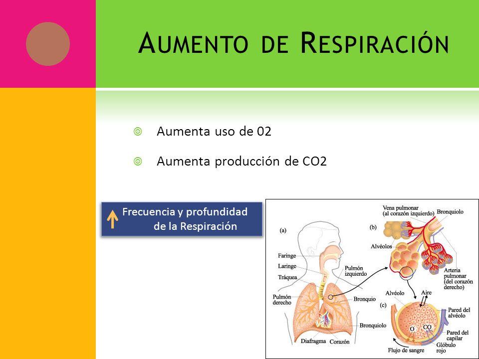 A UMENTO DE R ESPIRACIÓN Aumenta uso de 02 Aumenta producción de CO2 Frecuencia y profundidad de la Respiración