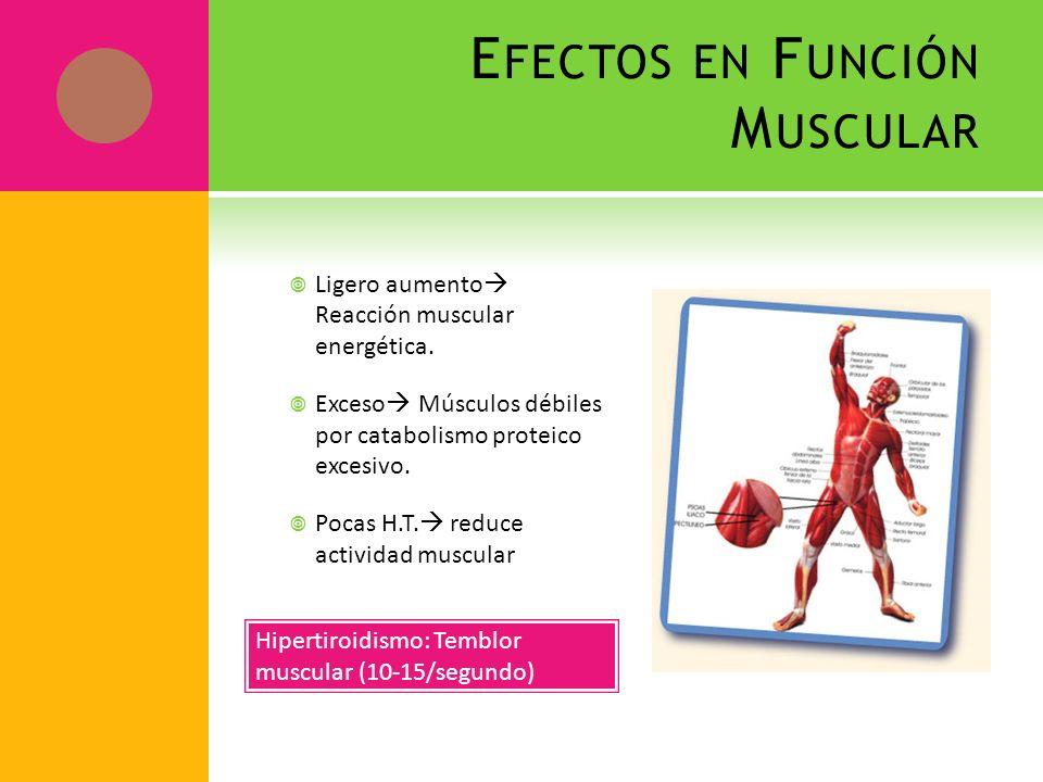 E FECTOS EN F UNCIÓN M USCULAR Ligero aumento Reacción muscular energética. Exceso Músculos débiles por catabolismo proteico excesivo. Pocas H.T. redu