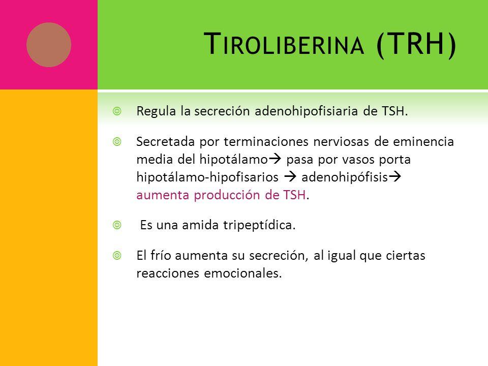 T IROLIBERINA (TRH) Regula la secreción adenohipofisiaria de TSH. Secretada por terminaciones nerviosas de eminencia media del hipotálamo pasa por vas