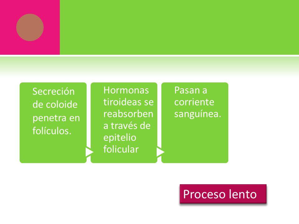 Secreción de coloide penetra en folículos. Hormonas tiroideas se reabsorben a través de epitelio folicular Pasan a corriente sanguínea.