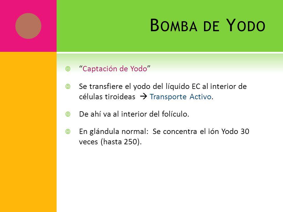 B OMBA DE Y ODO Captación de Yodo Se transfiere el yodo del líquido EC al interior de células tiroideas Transporte Activo. De ahí va al interior del f