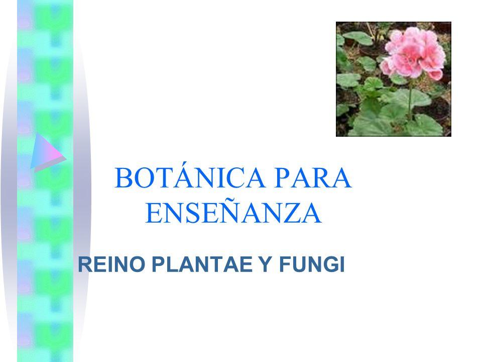 Características y diversidad de las plantas Fotosíntesis: Casi todas las plantas realizan fotosíntesis, son autotrofas CO 2 +H 2 O+ Energía solar Azúcares