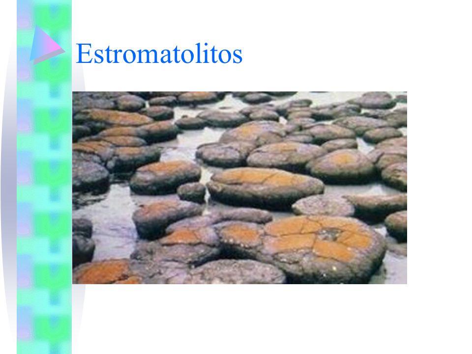 La biota del precámbrico estaba formada por organismos procariotas, microscópicos, anaeróbicos, autótrofos y heterótrofos Al final del precámbrico (Proterozoico), apareció la célula eucariota (aproximadamente hace 1500 millones de años) HISTORIA DE LA TIERRA