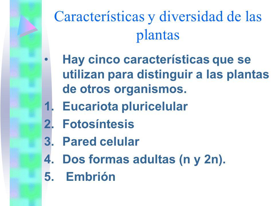 Eucariota pluricelular: Las plantas son eucariota, ya que poseen núcleo con membrana que contiene el ADN celular