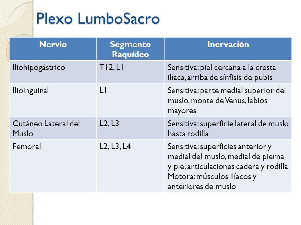 Plexo LumboSacro NervioSegmento Raquídeo Inervación IliohipogástricoT12, L1Sensitiva: piel cercana a la cresta ilíaca, arriba de sínfisis de pubis Ili