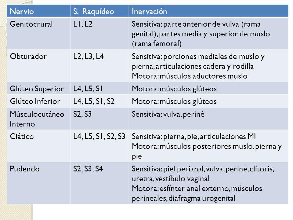 NervioS. RaquídeoInervación GenitocruralL1, L2Sensitiva: parte anterior de vulva (rama genital), partes media y superior de muslo (rama femoral) Obtur
