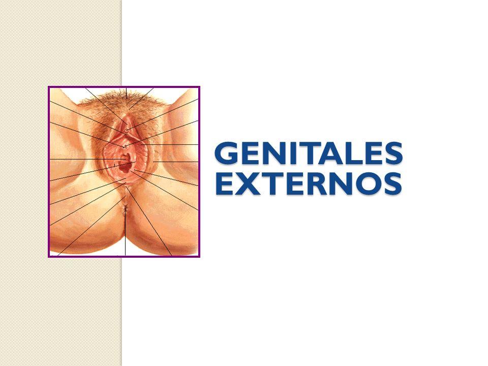 GENITALES EXTERNOS