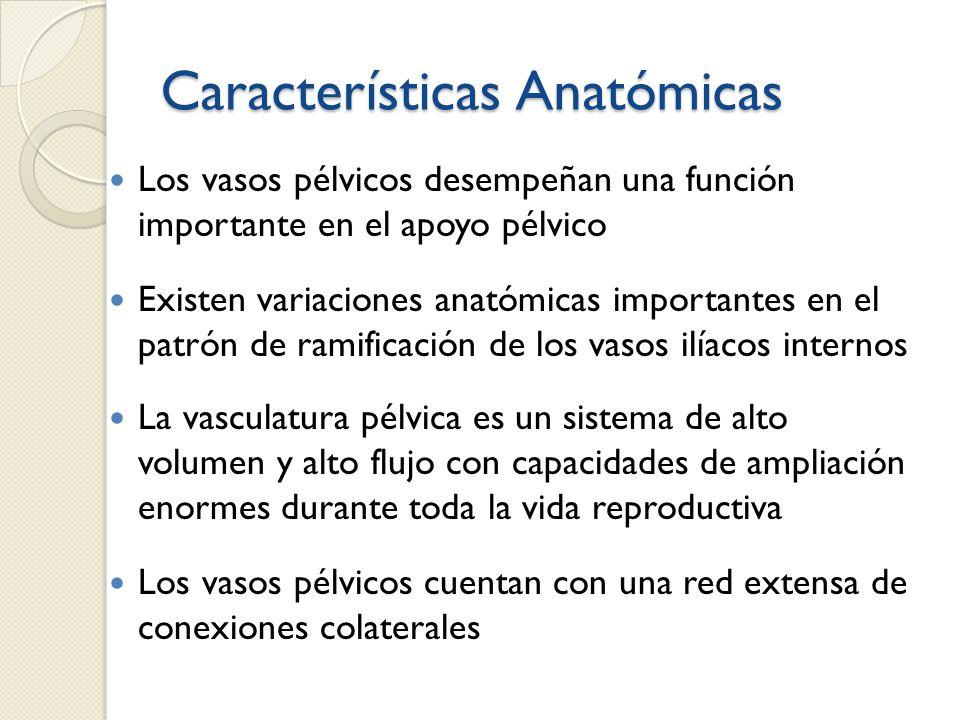 Características Anatómicas Los vasos pélvicos desempeñan una función importante en el apoyo pélvico Existen variaciones anatómicas importantes en el p