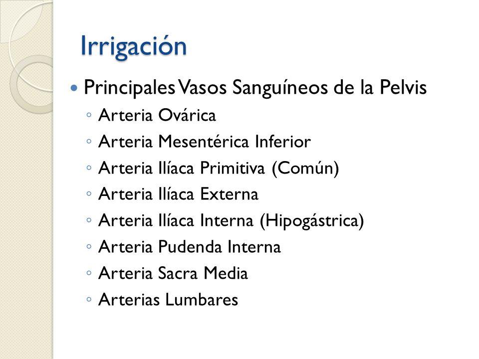 Irrigación Principales Vasos Sanguíneos de la Pelvis Arteria Ovárica Arteria Mesentérica Inferior Arteria Ilíaca Primitiva (Común) Arteria Ilíaca Exte