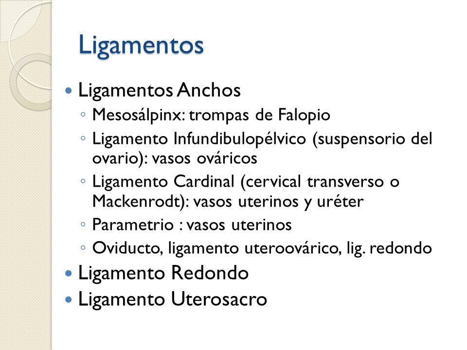 Ligamentos Ligamentos Anchos Mesosálpinx: trompas de Falopio Ligamento Infundibulopélvico (suspensorio del ovario): vasos ováricos Ligamento Cardinal