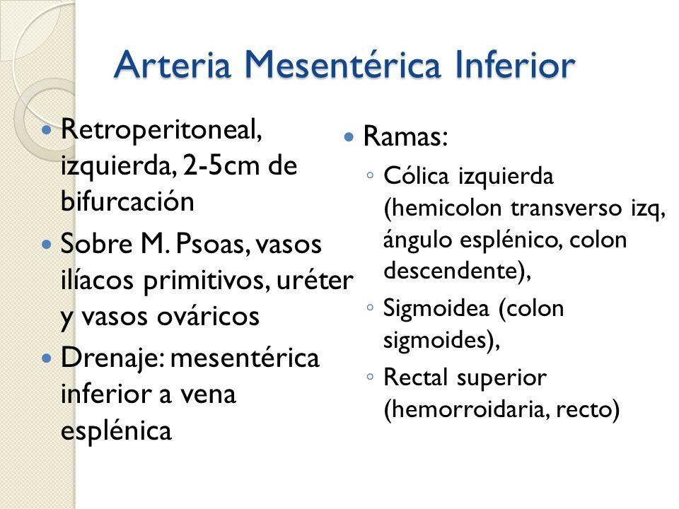 Arteria Mesentérica Inferior Retroperitoneal, izquierda, 2-5cm de bifurcación Sobre M. Psoas, vasos ilíacos primitivos, uréter y vasos ováricos Drenaj