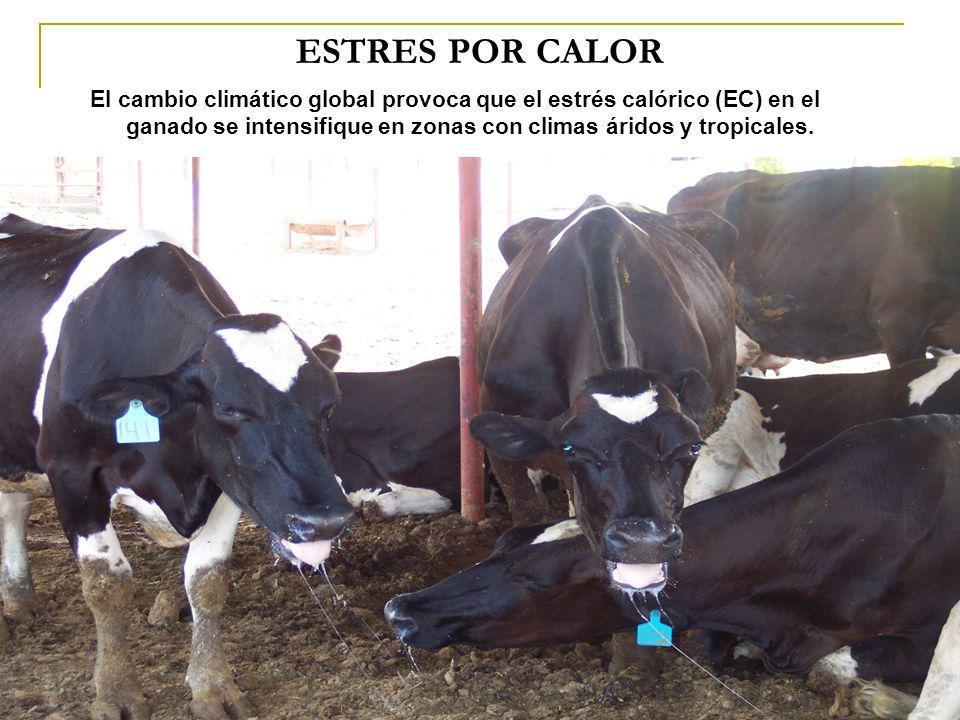 ESTRES POR CALOR El cambio climático global provoca que el estrés calórico (EC) en el ganado se intensifique en zonas con climas áridos y tropicales.
