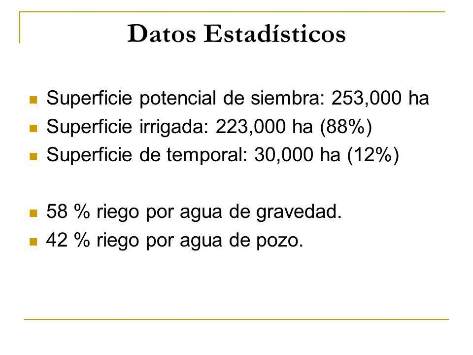 Datos Estadísticos Superficie potencial de siembra: 253,000 ha Superficie irrigada: 223,000 ha (88%) Superficie de temporal: 30,000 ha (12%) 58 % rieg