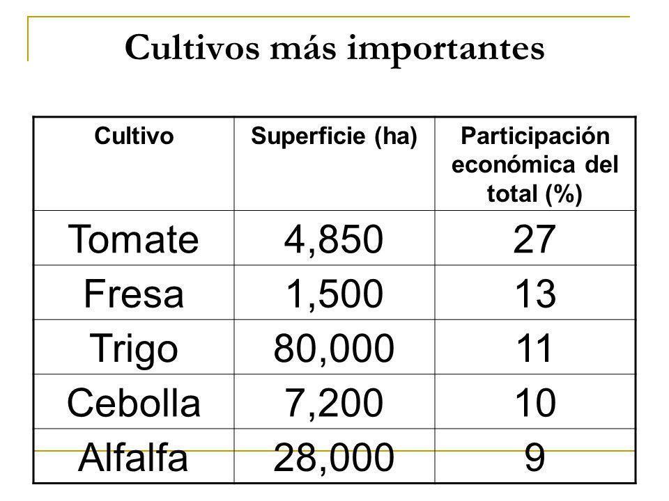 Cultivos más importantes CultivoSuperficie (ha)Participación económica del total (%) Tomate4,85027 Fresa1,50013 Trigo80,00011 Cebolla7,20010 Alfalfa28