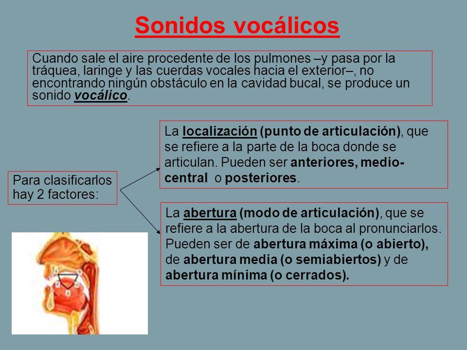 Sonidos vocálicos Cuando sale el aire procedente de los pulmones –y pasa por la tráquea, laringe y las cuerdas vocales hacia el exterior–, no encontra