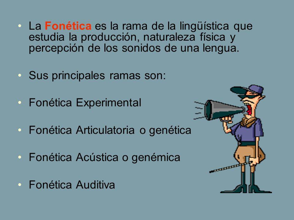 La Fonética es la rama de la lingüística que estudia la producción, naturaleza física y percepción de los sonidos de una lengua. Sus principales ramas