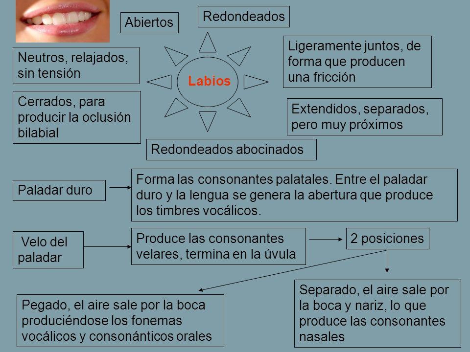 Labios Cerrados, para producir la oclusión bilabial Ligeramente juntos, de forma que producen una fricción Extendidos, separados, pero muy próximos Ne